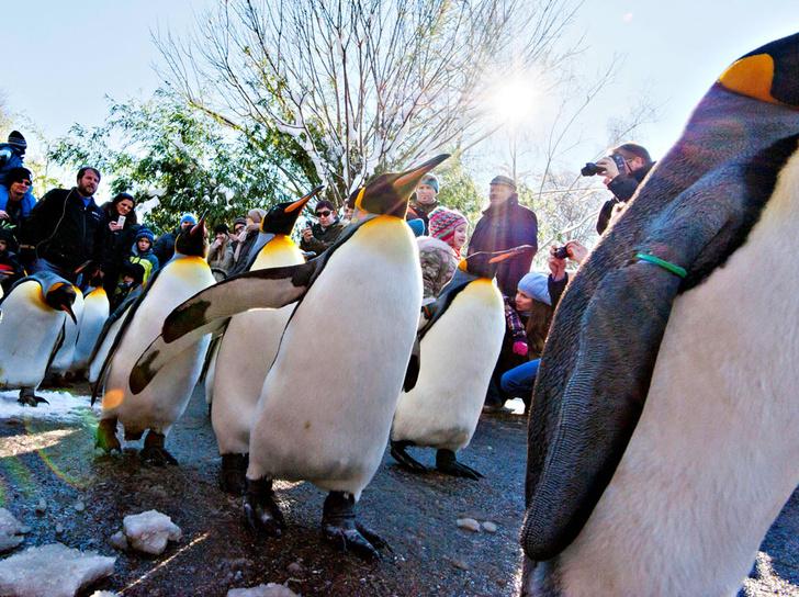 Фото №4 - Детки вне клетки: 12 лучших зоопарков мира