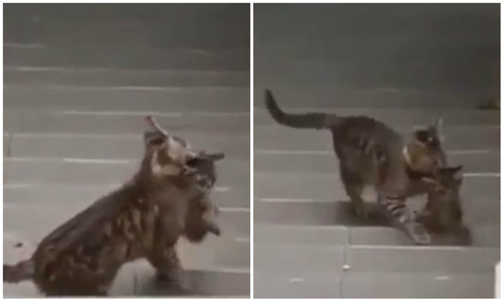 Фото №1 - Своих не бросаем: упорная кошка пытается затащить котенка на карниз (видео)