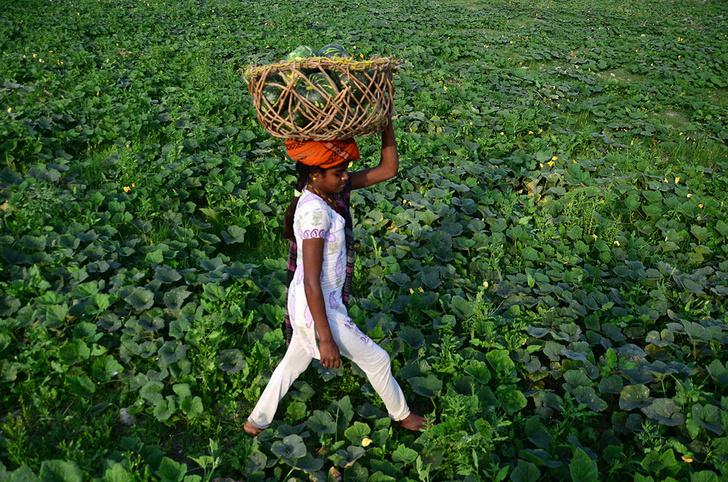 Фото №1 - Урожай
