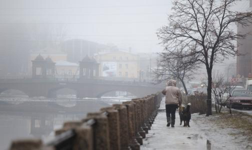 Фото №1 - Вредные вещества в воздухе Петербурга могут спровоцировать обострение  болезней органов дыхания