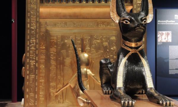 Фото №3 - Как кошки повлияли на историю человечества