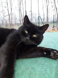 Фото №4 - Тест: Выбери черного котика и получи предсказание от Сабрины Спеллман