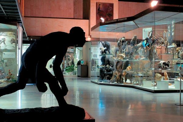Фото №1 - Музей эволюции, или Консервация прогресса