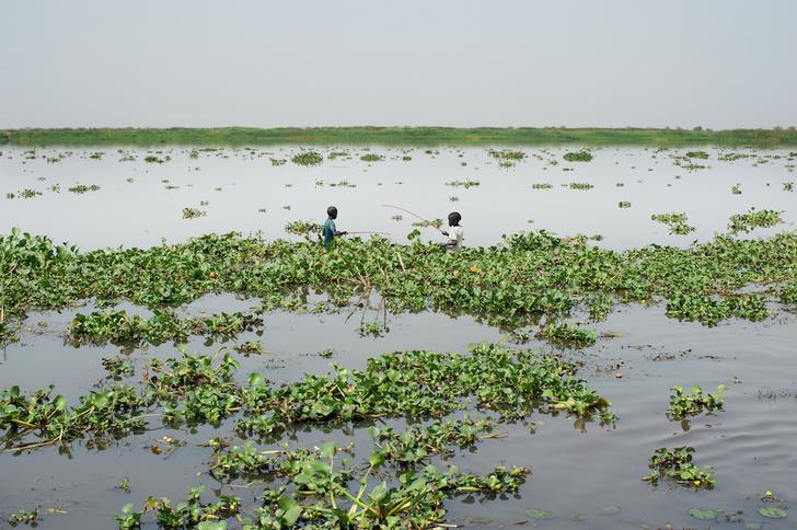 Фото №10 - Притягательная трясина: 12 самых живописных болот мира