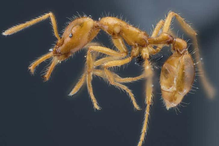 Фото №1 - Новый вид муравьев получил гендерно-нейтральное имя