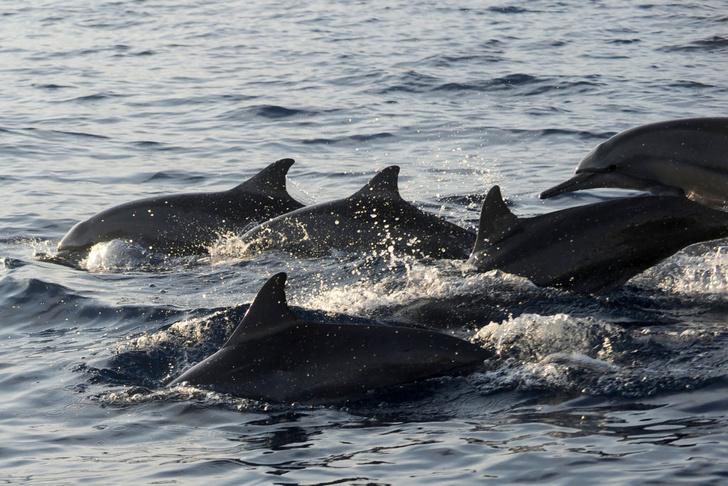 Фото №6 - Вторые после человека: 6 фактов о дельфинах