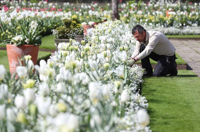 Фото №6 - Сад памяти Дианы: самая вдохновляющая причина попасть в Лондон