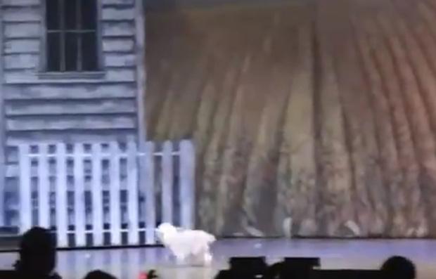 Фото №1 - Собачка, игравшая Тотошку в спектакле, потешно упала со сцены (видео)