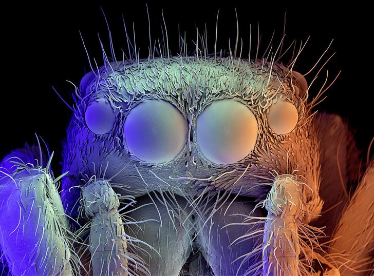 Фото №1 - Зоология: биомеханизм