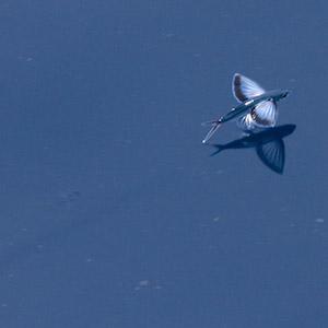 Фото №1 - Встреча в океане