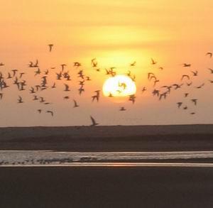 Фото №1 - Птицы воспринимают магнитное поле Земли глазами