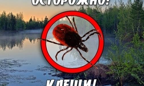 Фото №1 - В каких регионах, близких к Петербургу, клещи кусают чаще