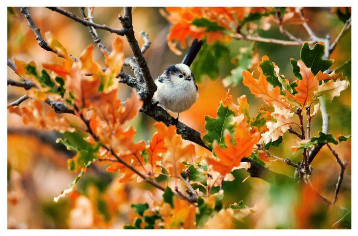 """Фото №6 - ВОКРУГ СВЕТА - партнёр выставки """"Лесные истории. Осень"""""""