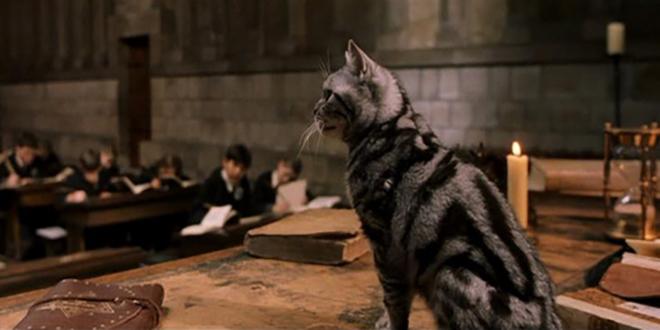 Фото №13 - 15 удивительных фактов о Гриффиндоре, которые знают не все фанаты «Гарри Поттера» 🦁