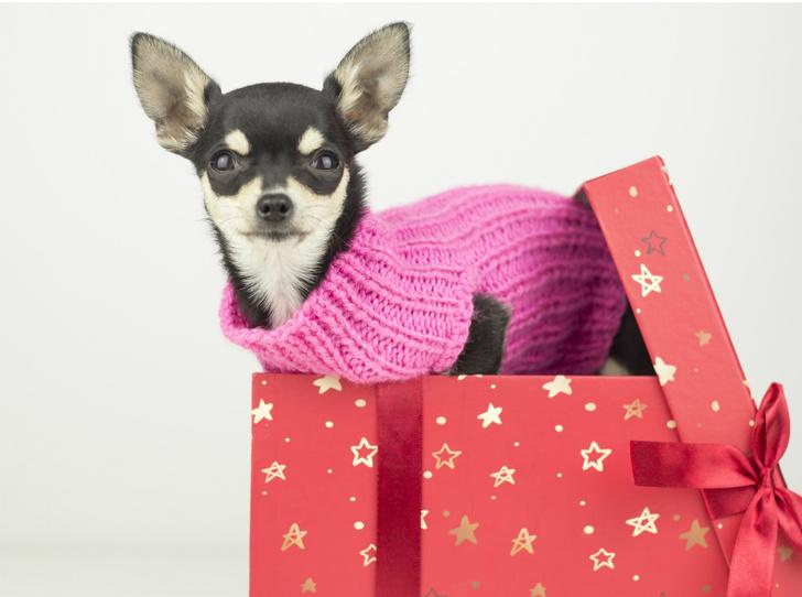 Фото №3 - «Плохие» подарки: что не стоит дарить согласно приметам и суевериям (и почему)