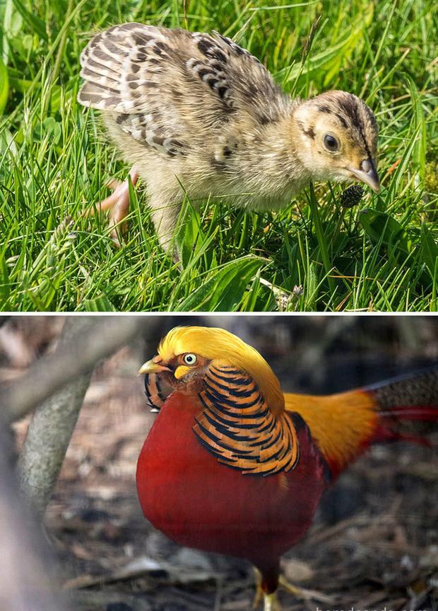 Фото №17 - 30 красивых птиц, которые были уродливыми птенцами (галерея)
