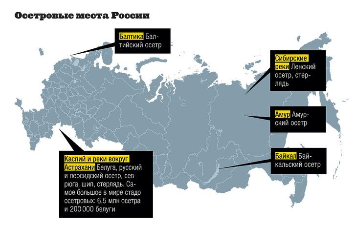 Фото №5 - Инфографика: черный рынок