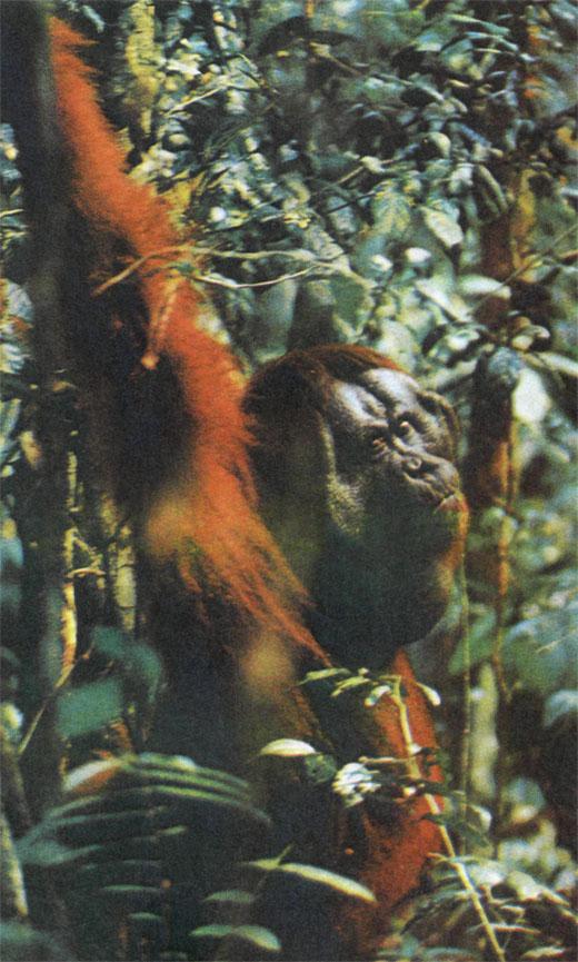 Фото №3 - В лесах Борнео