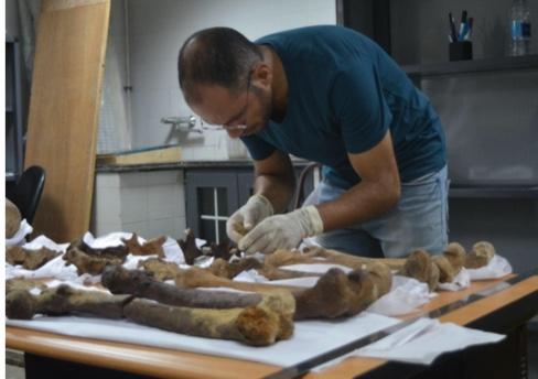 Фото №1 - Ученые узнали, кто был похоронен в черном саркофаге