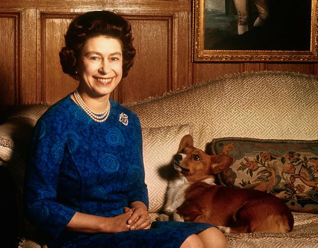 Фото №1 - Собаки ее величества: за что королева Елизавета любит корги