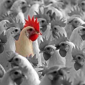 Фото №1 - Птичий грипп готовится к взлету