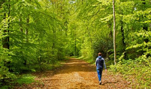 Фото №1 - Природотерапия: Медики выяснили, сколько надо гулять, чтобы чувствовать себя лучше