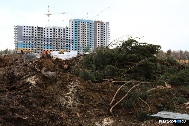 Фото №1 - Красноярские депутаты предложили заранее обсуждать массовую вырубку деревьев