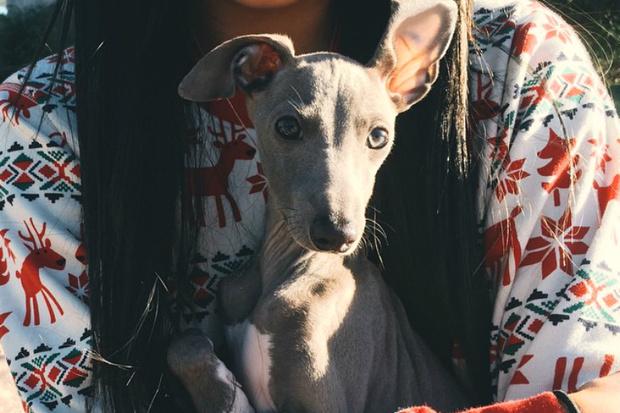 Фото №1 - У Кайли Дженнер появился милый щенок