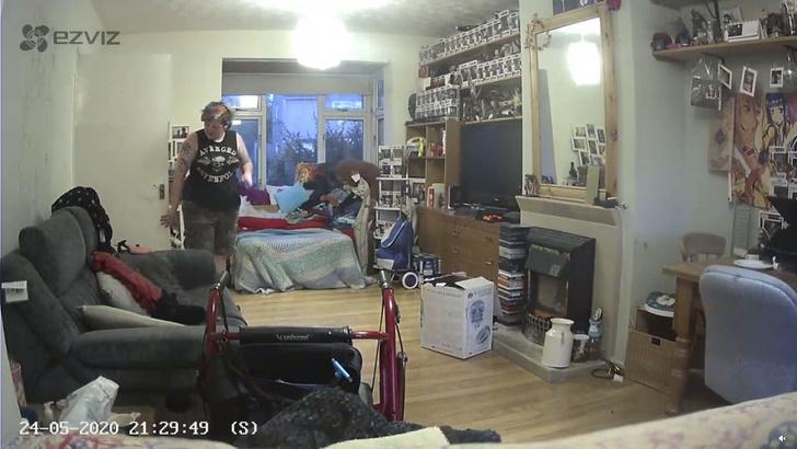 Фото №1 - Женщина поделилась видео с оптической иллюзией: ее покойный кот «материализуется» на диване