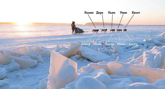 Фото №11 - Собачий холод