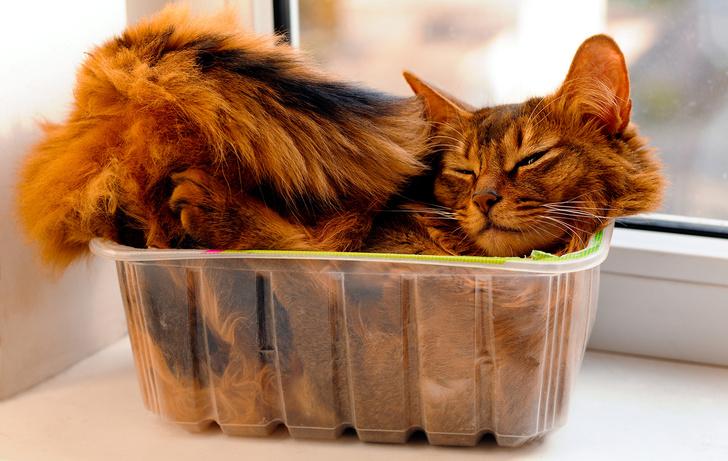 Фото №2 - 5 научных причин завести кота