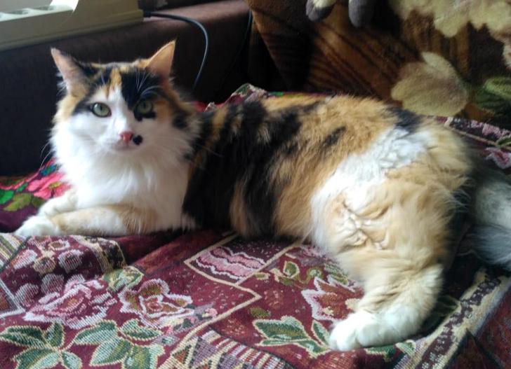Фото №2 - Котопёс недели: кошка Монро и собака Симка