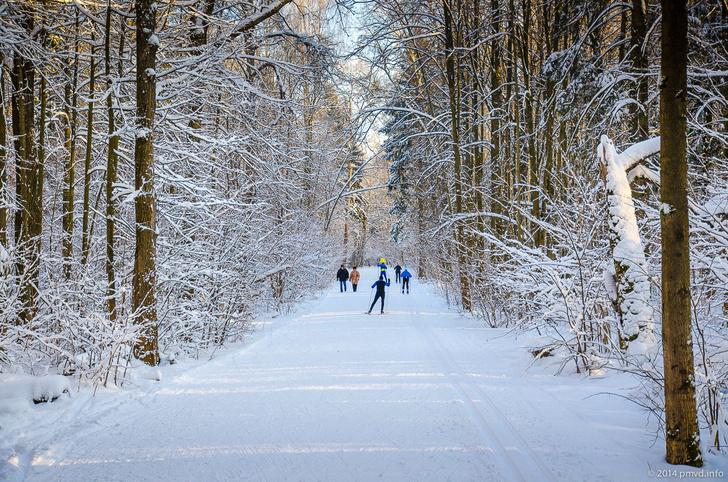 Фото №9 - Где кататься на лыжах и коньках в Москве