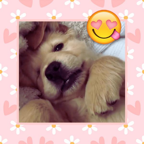 Фото №1 - Самые милые собачки в мире: фото и видео, после которых ты захочешь завести щеночка