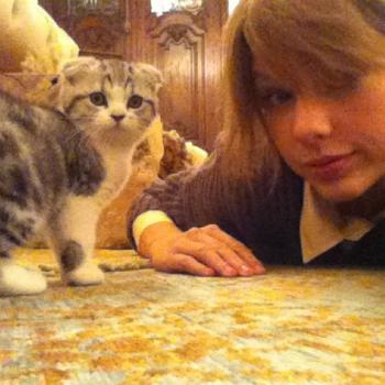 Тейлор Свифт показала свою кошку в Instagram