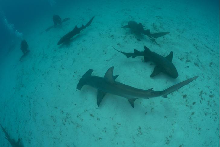 Фото №2 - Умные до ужаса: акулы — профессора убийства