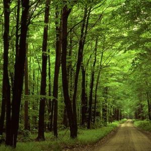 Фото №1 - Меньше леса, больше убытков