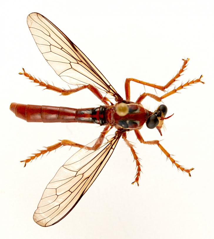 Фото №1 - Новые виды насекомых назвали в честь героев комиксов
