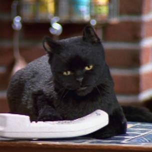 Фото №1 - Тест: Какая ты странная кошка из «Кошек»?