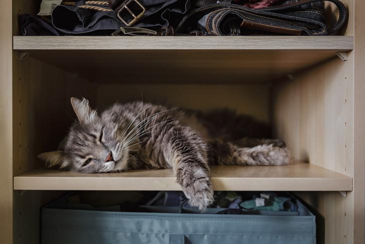Фото №2 - Почему кошки любят забираться в шкафы и ящики
