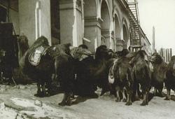 Фото №5 - Кнут Радинг, телеграфист и фотограф