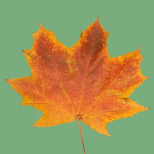 Фото №2 - Тест: Выбери осенний листок и узнай, с чем тебе придется расстаться в сентябре 🍂