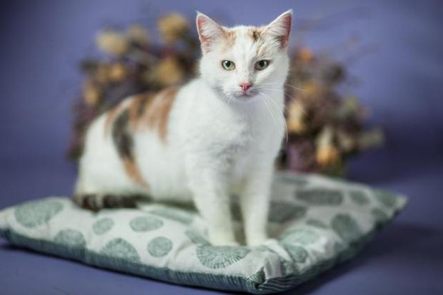 Фото №5 - Котопёс недели: возьми из приюта собаку Тростинку или кошку Стешу
