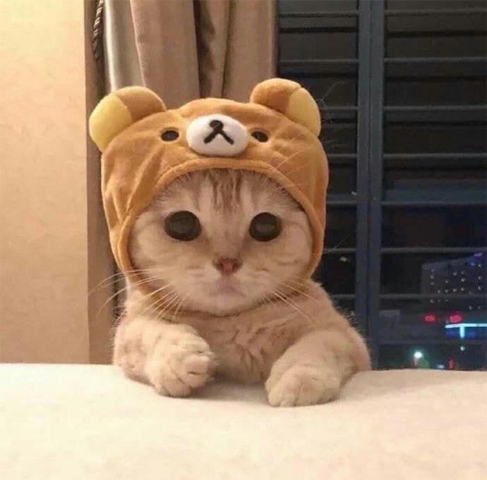 Фото №12 - 20 мемных котов, похожих на известных режиссеров