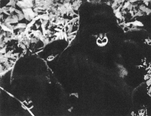 Фото №1 - Сорок восьмой Маугли