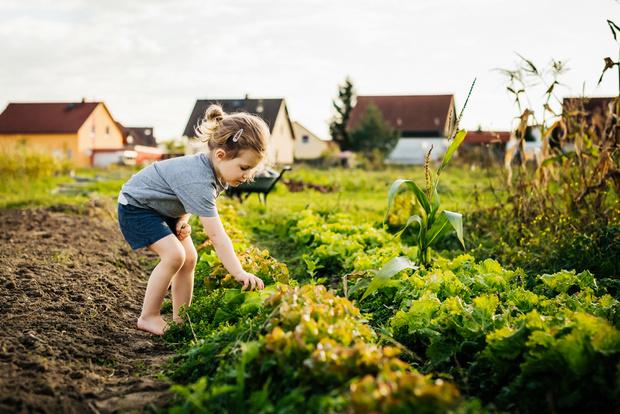 Фото №2 - Главные опасности, которые подстерегают детей на даче