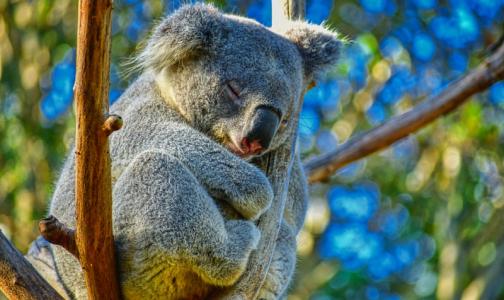 Фото №1 - Сомнолог объяснил, как на выходных лучше бороться с недосыпом