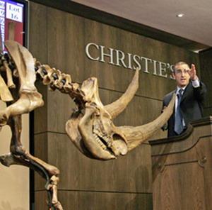 Фото №1 - Доисторические кости выставлены на продажу