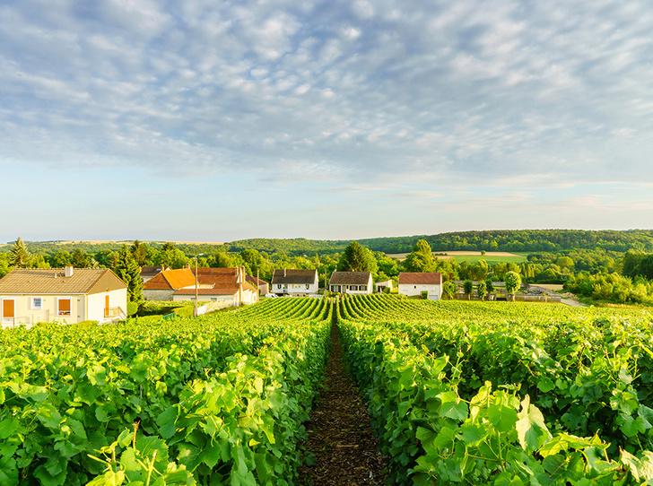 Фото №2 - Вино с приставкой «bio»: кто ввел тренд на биодинамические вина и где их искать