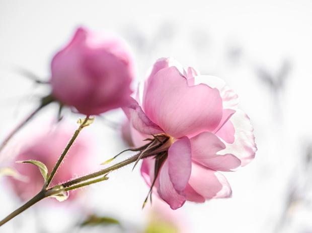Фото №6 - Декларация любви: новый аромат Miss Dior Eau de Parfum